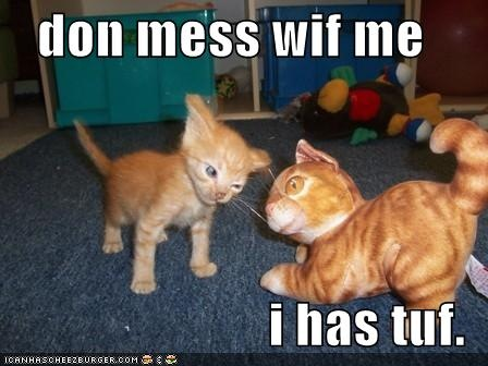 LOLCats the latest greatest