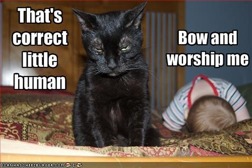 LOLCats Best Of The Week