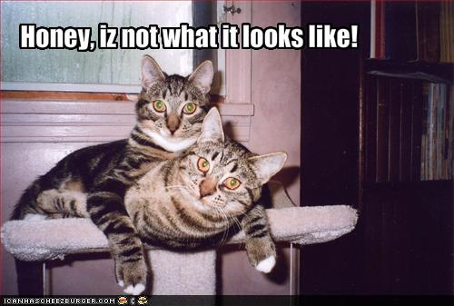 LOLCats, Iz not what it looks like!