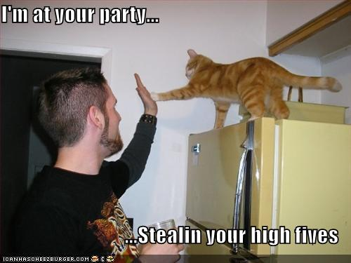 cat is at your party and stealing your high fives